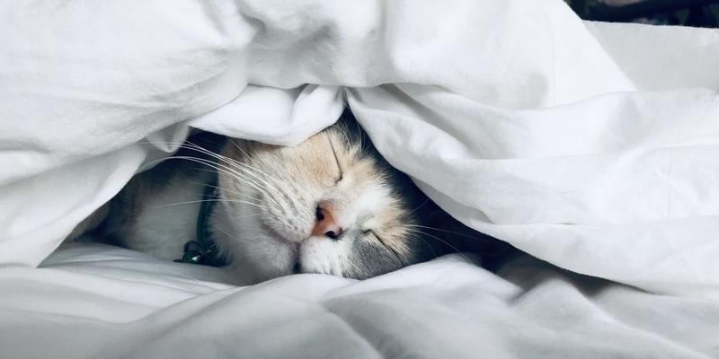 Jangan Biarkan Karier Merusak Kualitas Tidur Anda