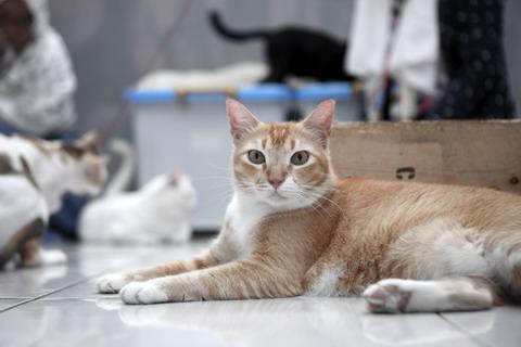 Unduh 92+  Gambar Kucing Jalanan Paling Lucu Gratis